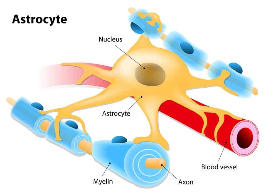ilustrace funkce astroglií