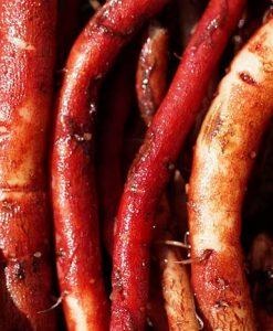 čerstvé kořeny šalvěje červenokořené