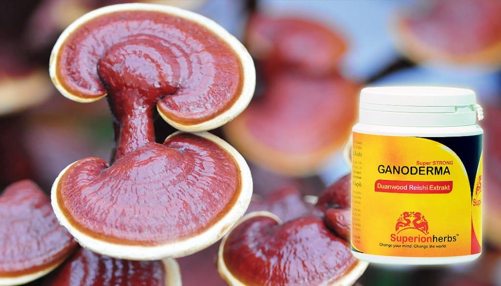 houba Ganoderma, doplněk stravy Duanwood Reishi Extrakt Superionherbs