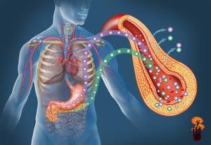 Reishi – obezita a cukrovka, lesklokorka lesklá