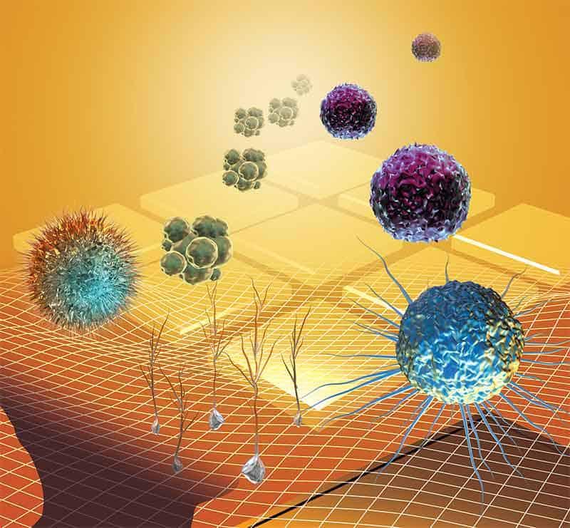 Reishi - možnosti použití při rakovině - grafika s rakovinovými buňkami