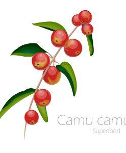 Camu Camu - nízký malý strom rostoucí divoce podél řek v oblastech amazonských deštných pralesů