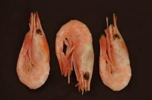 tři krevety