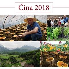 koláž s fotografiemi z číny z roku 2018