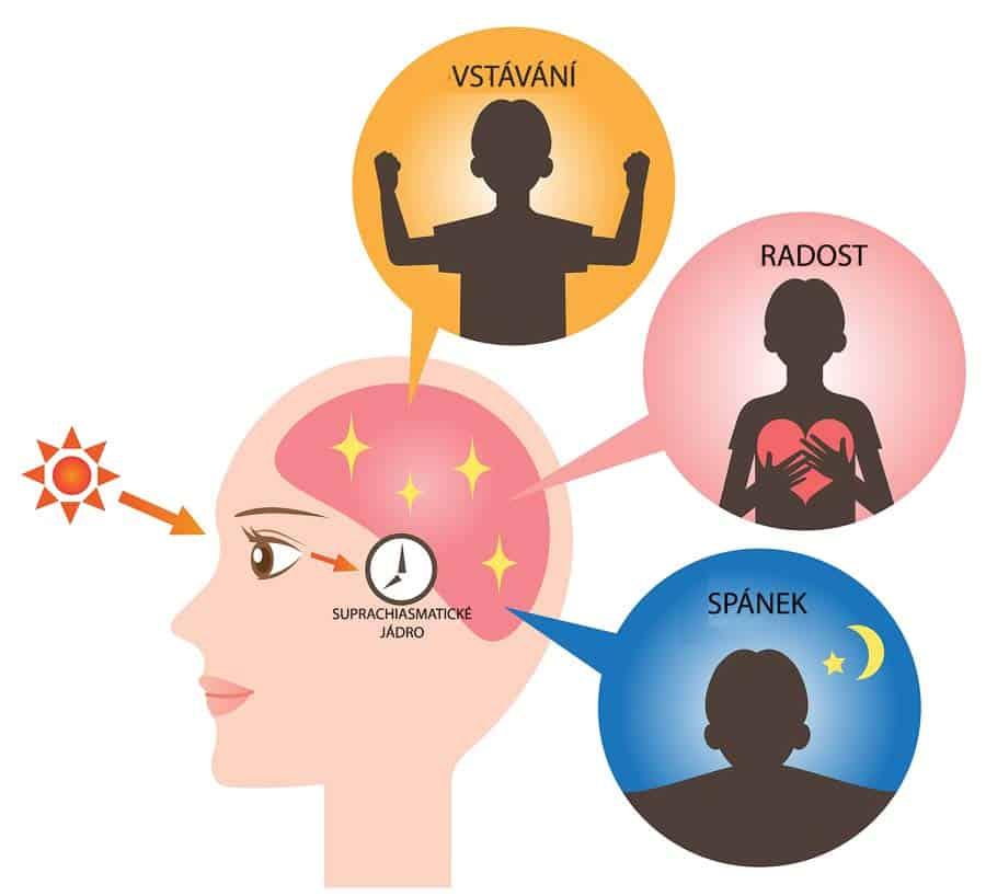 Jak různé činnosti ovlivňují fungování mozku