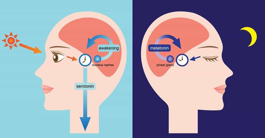 denní a noční aktivita mozku