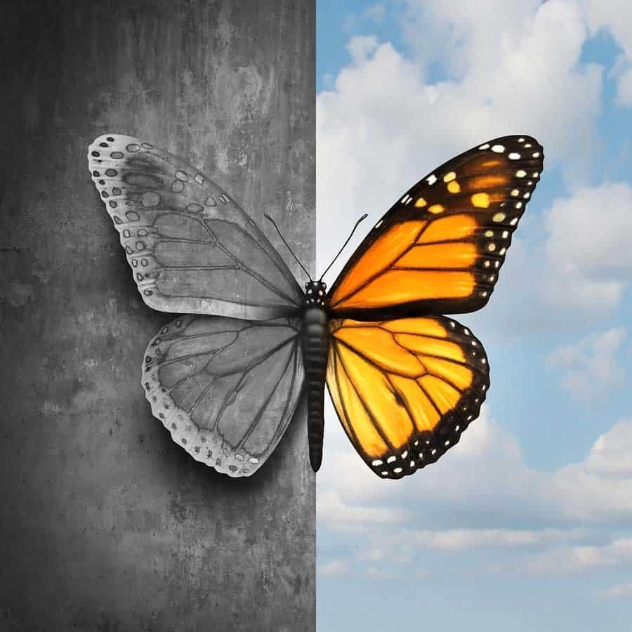 obrázek motýla na obloze z poloviny černobílý, napůl barevný