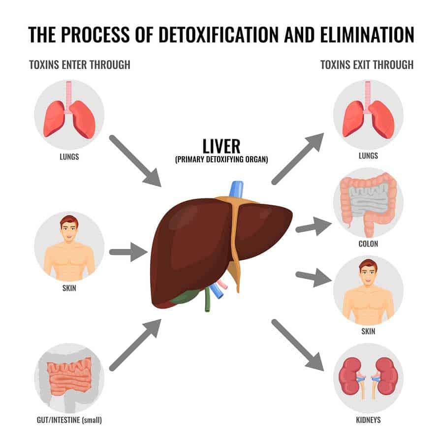 Detoxikace organismu a očista