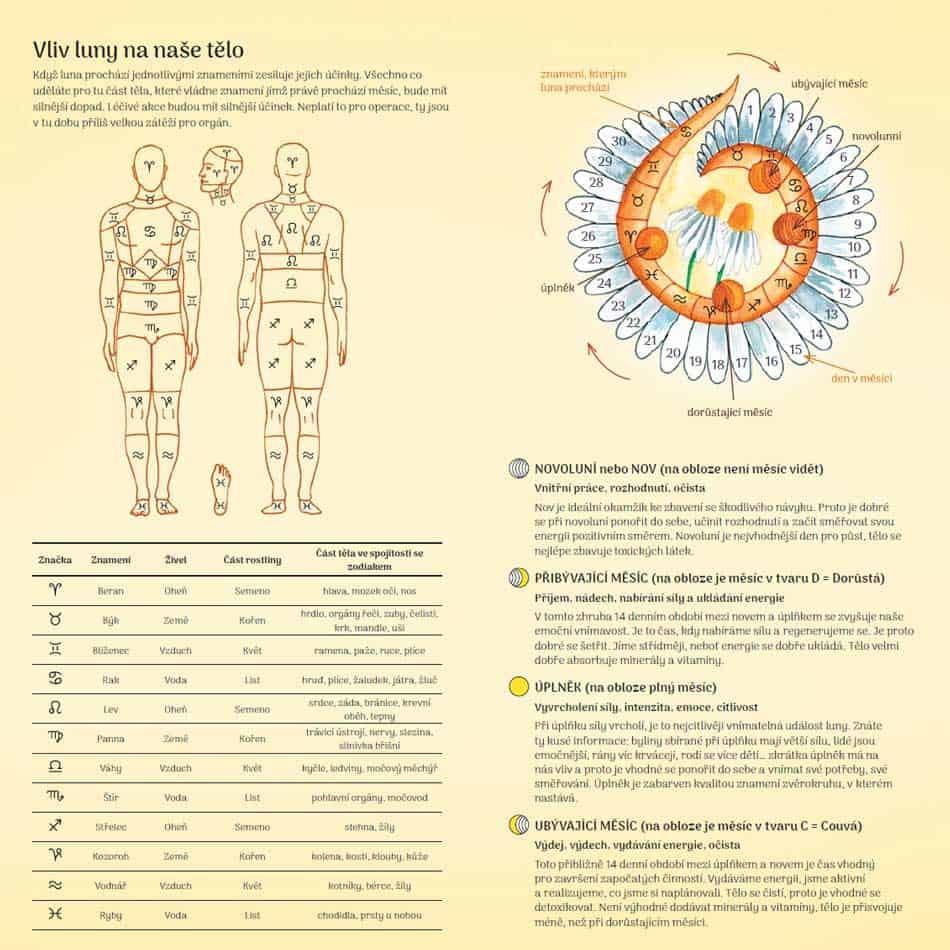 náhled ručně malovaného, plánovacího, lunárního Reishi diáře - stránka vliv luny na naše tělo