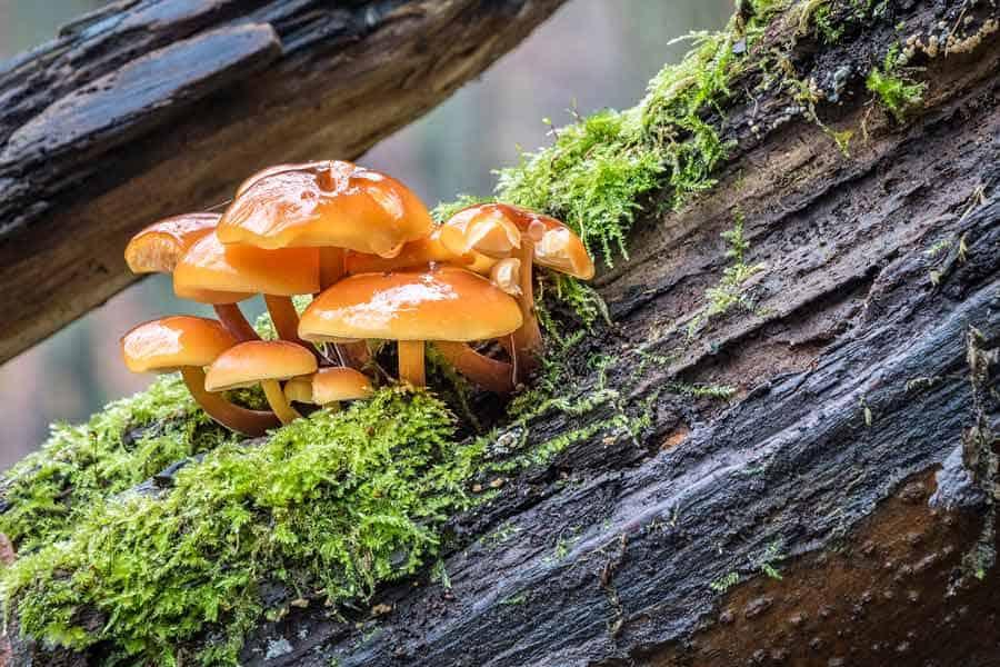 Léčivé houby