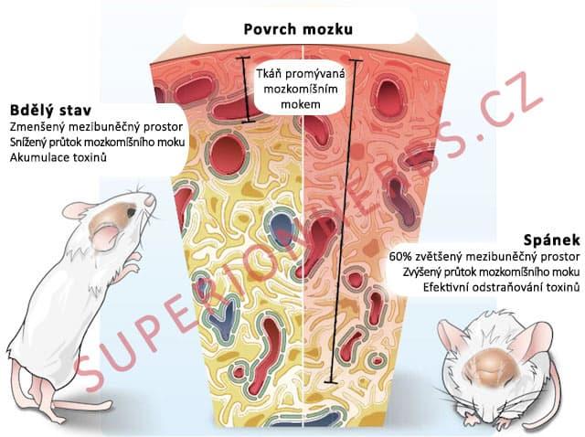 glymafaticky-system-spanek