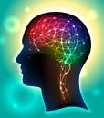 hericium-pro-mozek