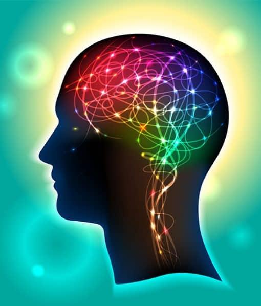 nákres hlavy se znázorněným nervovým propojením