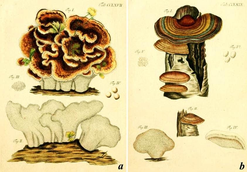 Outkovka pestrá v atlasu hub