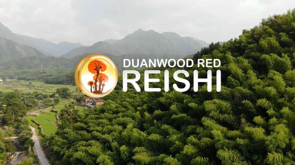 videodokument o pěstování Reishi