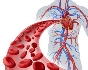 zobrazení kardiovaskulárního systému