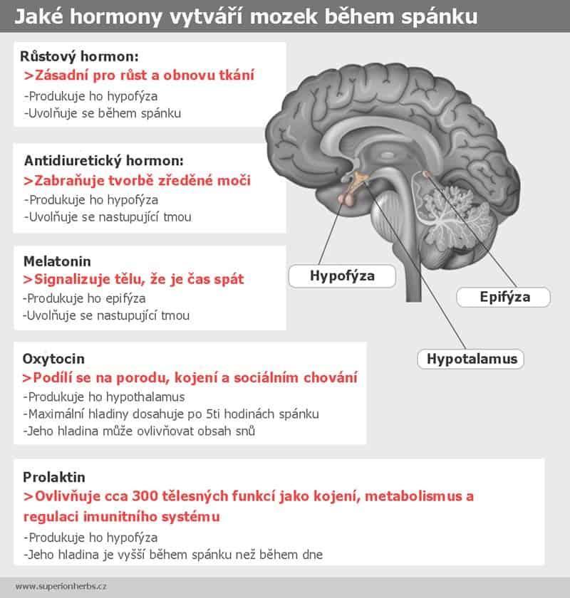 Grafika s popisem jaké hormony vytváří mozek během spánku