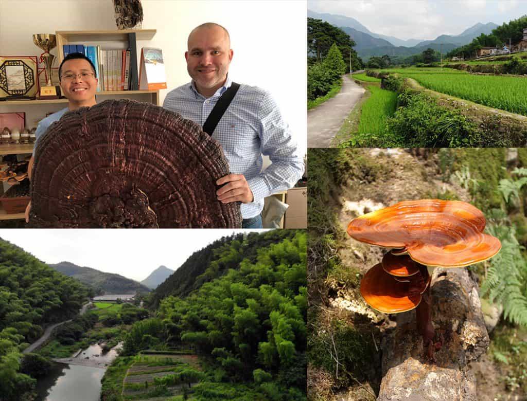 Koláž fotek s Čínskou krajinou, houbou Redwood Reishi a Pavlem Štěpkou s asijským kolegou a obří houbou