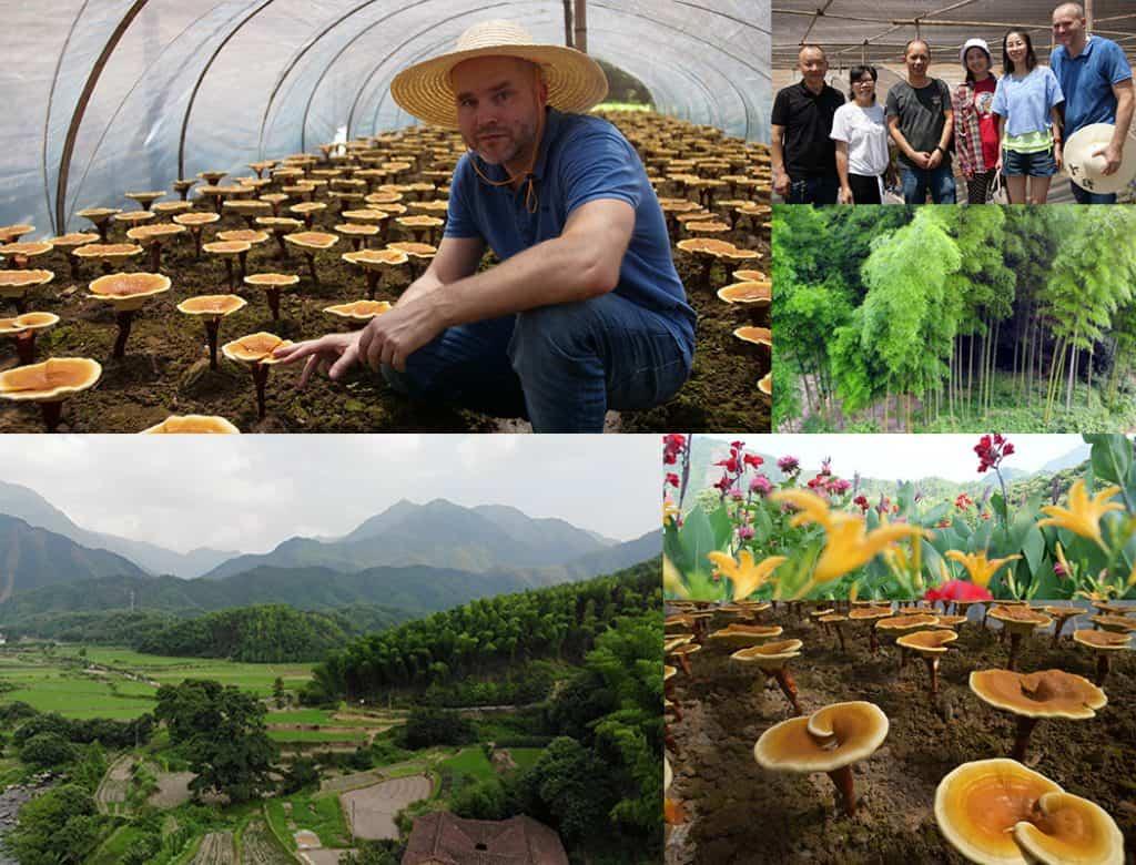 Koláž fotografií z Čínskou krajinou, houbami a Pavlem Štěpkou ve fóliovníku s houbami