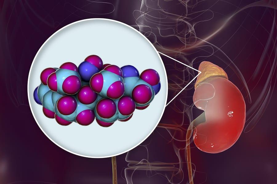 Ilustrace vzniku kortizolu