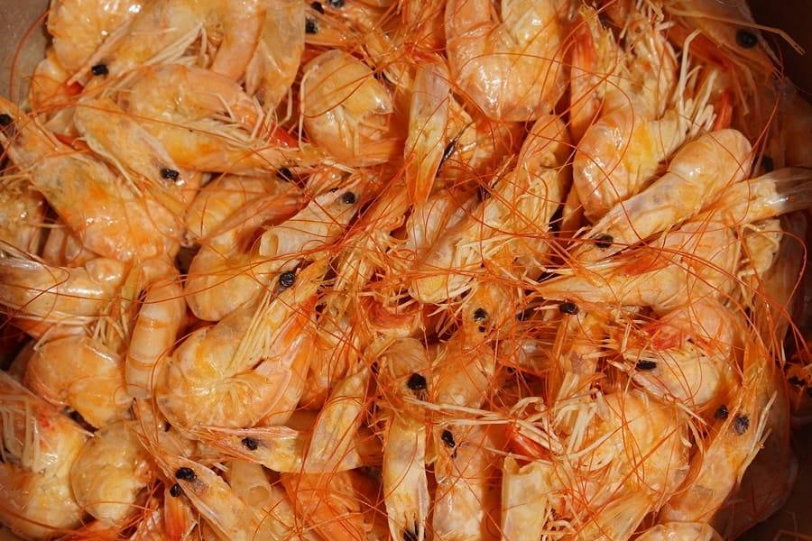 miska krevet, které jsou zdrojem chitinu