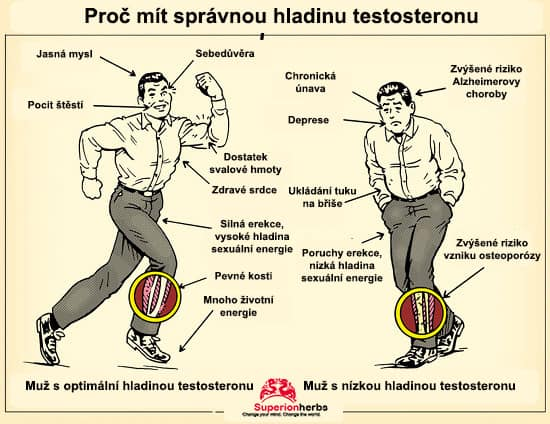mužský pohlavní hormon