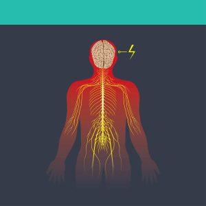 ilustrace lidského nervového systému