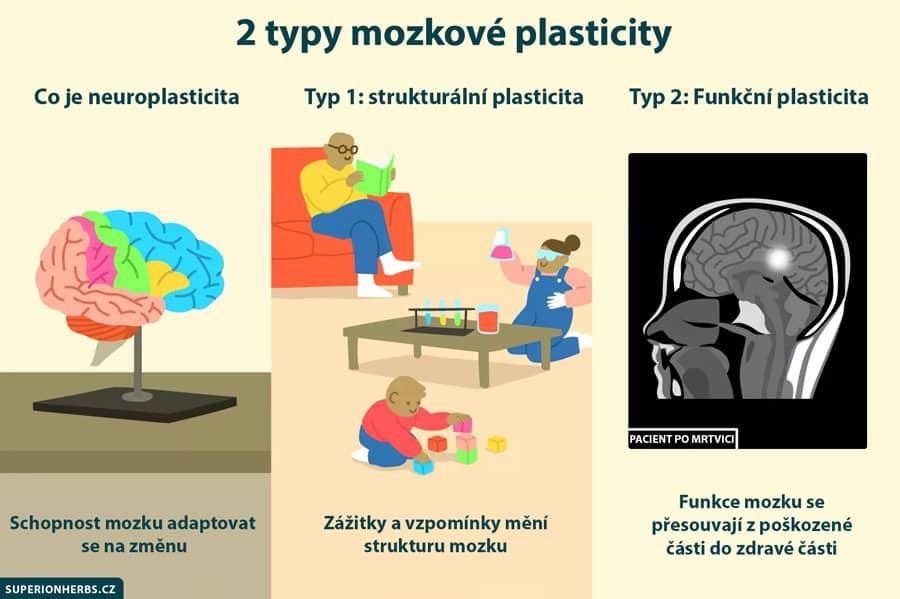 typy mozkové plasticity