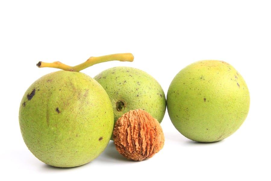plody a vyloupnutý ořech ořešáku černého