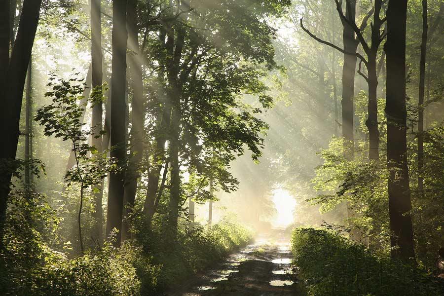 Lesní cesta po dešti, oslněná slunečními paprsky