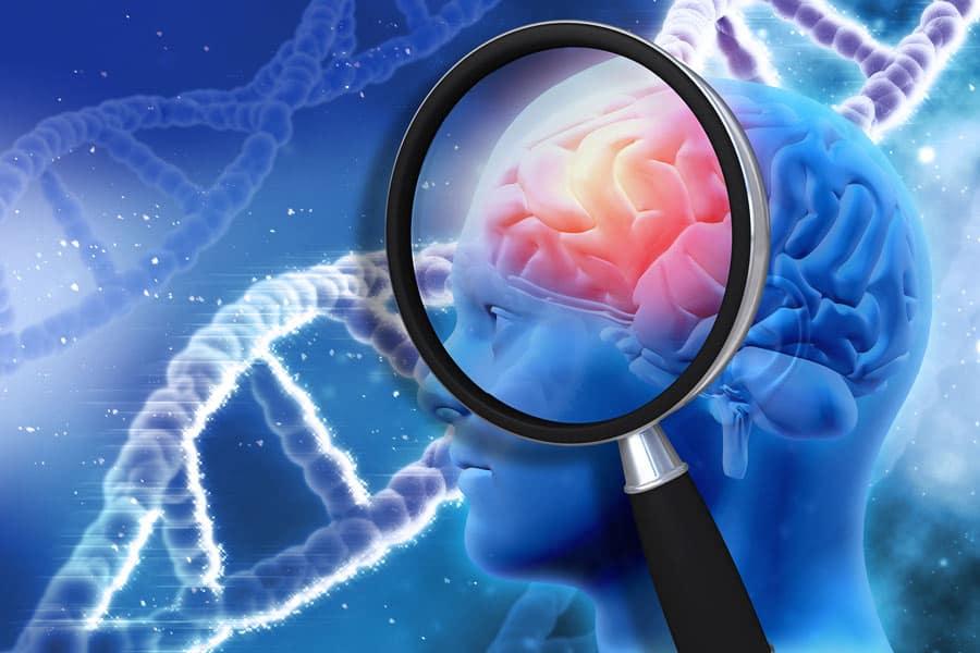 3D obrázek hlavy se znázorněním mozkové části a lupa