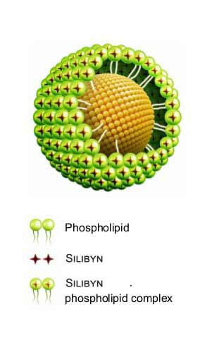 Patentovaná forma Silybin Phytosome