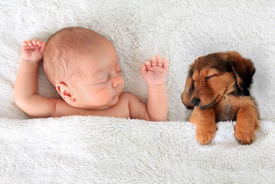 spící miminko se štěňátkem pod jednou dekou