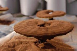 Sporový prášek houby reishi