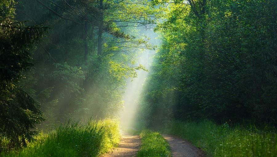 Lesní cesta se slunečními paprsky