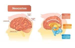 zobrazení částí lidského mozku