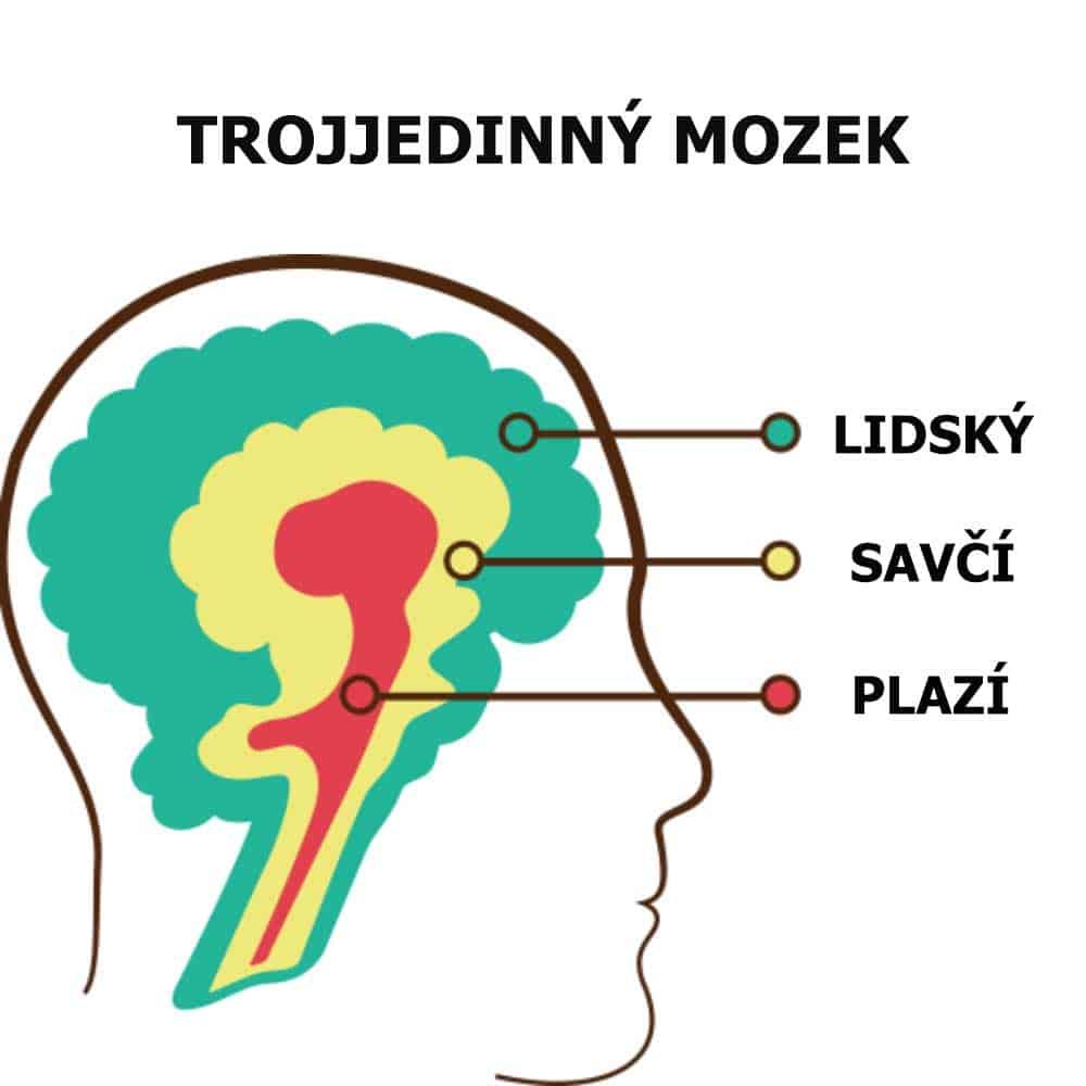 ilustrace trojjedinného mozku