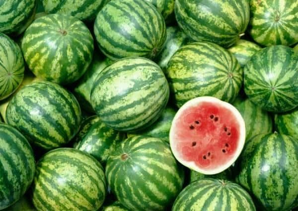 watermelonsss
